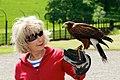 Jennie Bond with Harris Hawk - Swinton Park.jpg
