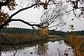 Jesień nad stawem - panoramio.jpg