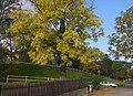 Jesień w Karpaczu - panoramio.jpg
