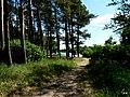 Jezioro Sępoleńskie ścieżka przy brzegu - panoramio.jpg