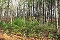 Johnny Appleseed Birthplace - Leominster, Massachusetts - DSC09152.jpg