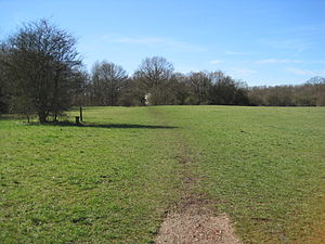 Jubilee Country Park - Grassland in Jubilee Country Park
