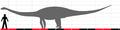 Kaatedocus siberi size.png