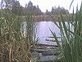 Kabaty Forest pond.jpg