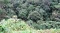 Kakki Forest Area - panoramio (2).jpg