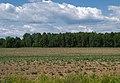 Karizha fields 01b.jpg