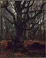 Karl Bodmer - Oaks and Wild Boars - 06.3 - Museum of Fine Arts.jpg