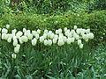 Keukenhof Garden (10).JPG