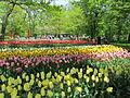 Keukenhof Garden (17).JPG