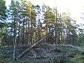 Kivikon ulkoilupuisto - panoramio (4).jpg