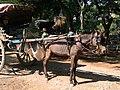 Konna taxi małej mocy w Mandalay - Low power taxi - panoramio.jpg