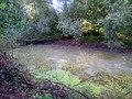 Konotop Zelenchak swamp - 01.jpg