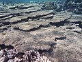 Korallen im Roten Meer..DSCF3866F.jpg
