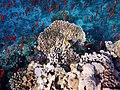 Korallenriff im Roten Meer..DSCF5704BE.jpg