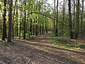 Krasnyy Khutir forest7.jpg