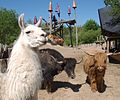 Kulturinsel Einsiedel leisure park animals.JPG