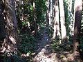Kumano Kodo Kogumotorigoe World heritage38.JPG