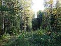Kungursky District, Perm Krai, Russia - panoramio (251).jpg