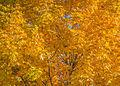 L'automne au Vieux-Port de Montréal (15440229566).jpg
