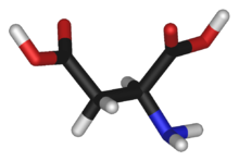 L-aspartic-acid-3D-sticks2.png