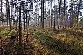 LSG Forst Rundshorn IMG 2315.jpg