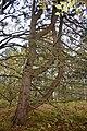 LSG Sudmerberg - Bäume (1).jpg