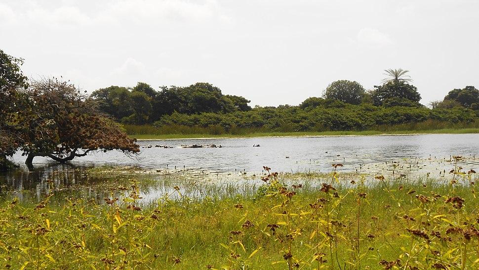 Lagoa com hipopótamos 01