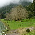 Lagoa das Furnas S. Miguel, Açores,Portugal - panoramio (3).jpg
