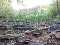 Landschaftsschutzgebiet 14974 Ludwigsfelde Pechpfuhl 11.jpg