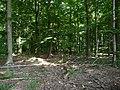 Landschaftsschutzgebiet Waldgebiet bei Neuenkirchen Melle - Im Wald- Datei 1.jpg