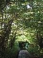 Lane at Millpool - geograph.org.uk - 185744.jpg