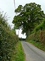 Lane to Brockhampton - geograph.org.uk - 1449967.jpg