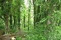 Las nadmorski w Dziwnowie - panoramio.jpg