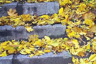 Laub Treppen.jpg
