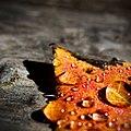 Leaf (4545881400).jpg