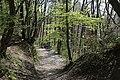 Leitenwälder der Isar 0629.jpg