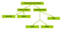 Lenguas caucásicas noroccidentales.png