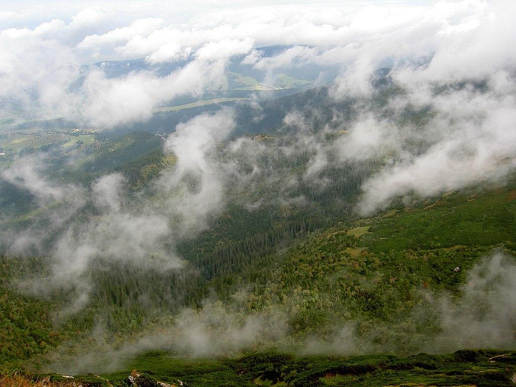 Lesy hospodária s vlahou