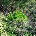 Levada Wanderungen, Madeira - 2013-01-10 - 85900226.jpg