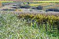 Limberg Weingärten Herbst.jpg