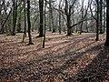 Little Wood - geograph.org.uk - 386015.jpg