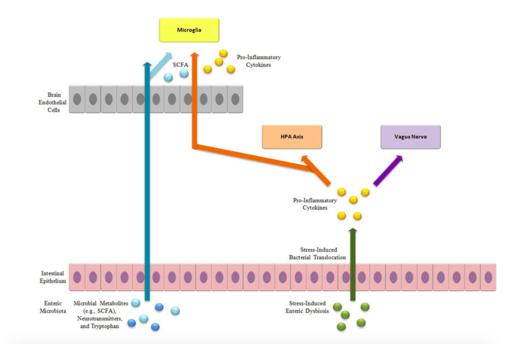 Liu gut-brain-axis schema
