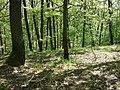 Locatelliwald westlich des Buchbergs sl2.jpg