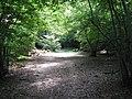 Logged fallen tree beside bridleway - geograph.org.uk - 1389770.jpg