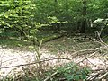 Logs within Northfield Wood - geograph.org.uk - 1324819.jpg