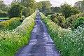 Long Drove,Westbury Moor - geograph.org.uk - 288673.jpg