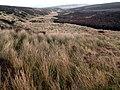 Long Moor Clough looking East - geograph.org.uk - 368323.jpg