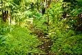 Lyon Arboretum - Aihualama Trail (8331418644).jpg