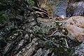 Macquarie Pass National Park 03.jpg