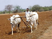 Mahabubnagar District farmer